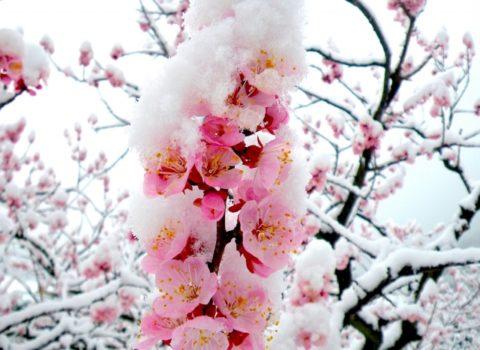暖冬の影響と問題点とデメリット!雪とインフルエンザはどうなる?