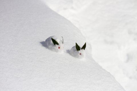 寒中見舞いの時期と例文!写真入りはありなのか?