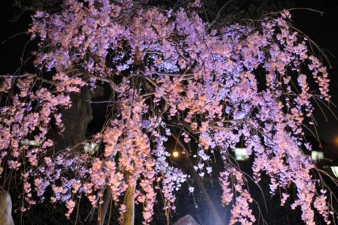 大阪の夜桜の人気スポット7選!服装には気をつけよう