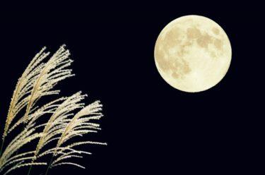 中秋の名月はいつ?意味と由来は?月見団子とススキを飾る理由を解説